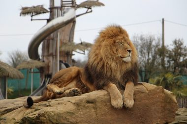 Eductour_ZoodeBeauval_mars_2018 (5)