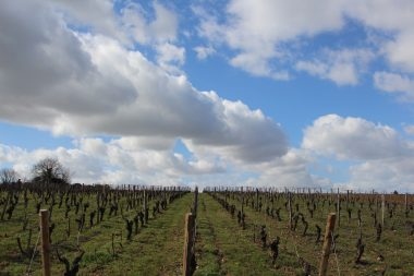 Vins de Loire Amboise Val de Loire Vinoloire
