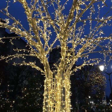 noel amboise arbre de lumière