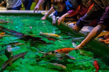Grand aquarium de Touraine Amboise