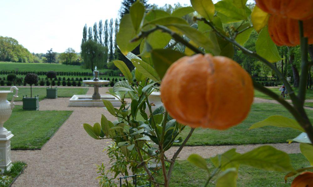 4. Orangers et Grands Parterres – 4