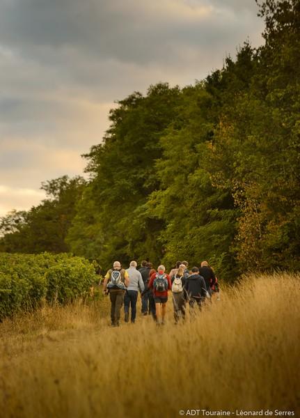 Dans les vignes au crépuscule