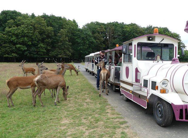 Réserve de Beaumarchais – Les grands gibiers d'élevage en Safari Train